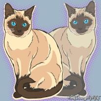 cat21-2